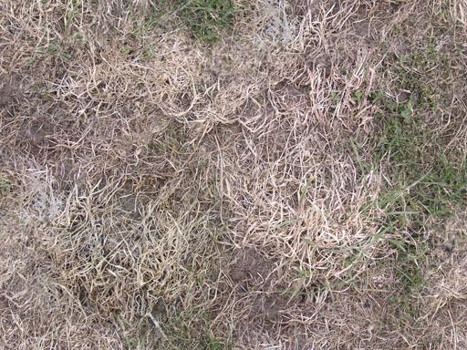 Gras bildburg for Boden herbst 2016